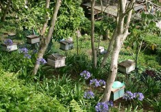 How Combining Fruit Farming With Bee-Keeping Increases Yields