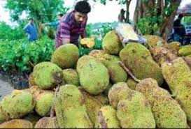 Kerala Gets Official Fruit Jackfruit on Statistics Of Fruits And Vegetables Their Value Added