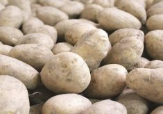 Waste Potatoes Transformed Into Beauty Creams