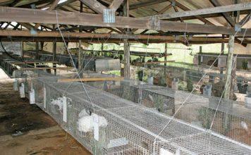 rabbit-cages