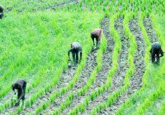1m farmers grow bio-fortified crops in Nigeria – Harvestplus